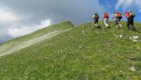Oberhalb der Narzissen Richtung Gipfel