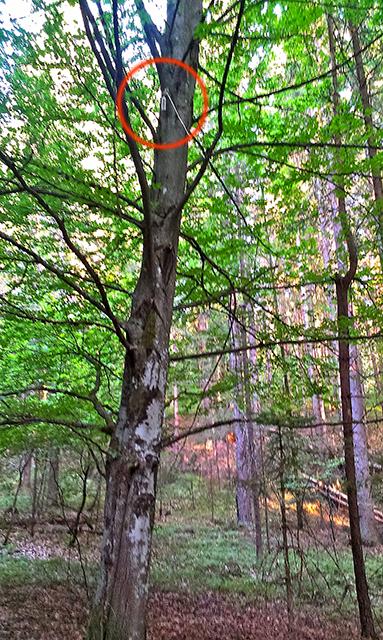 Auffindestelle unter diesem Baum