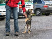 Lawinen- und Suchhund